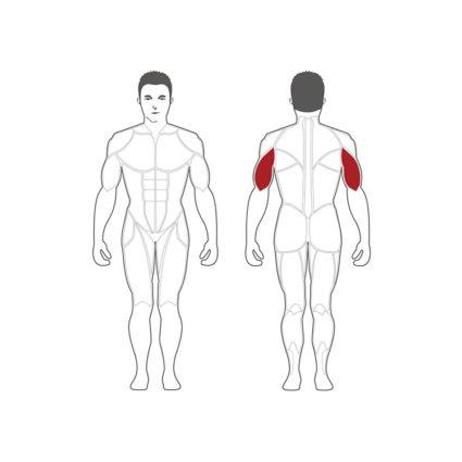 triceps extansion machine pour disques olymique